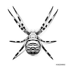 spider symmetric top view with stripes sketch vector graphics