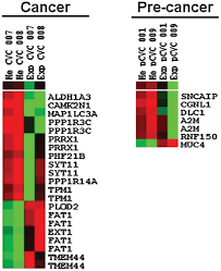 identification of differentially u2011expressed genes by dna