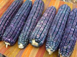 Best Set The Table Photos 2017 Blue Maize by Southern Exposure Seed Exchange Blog