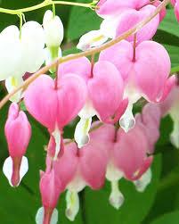 flower gardens your best flower gardens martha stewart