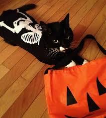 Halloween Costume Cat Halloween Costumes Cats 20 Black Cat Halloween Costume