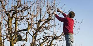 set up an appointment with childers tree service for a free