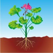 learnhive cbse grade 10 science life processes in plants