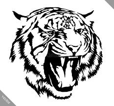 black and white ink draw tiger vector illustration stock vector