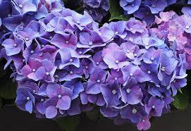 purple flowers purple flowers blossom free photo on pixabay