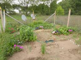 using plants for natural pest control in vegetable gardens the