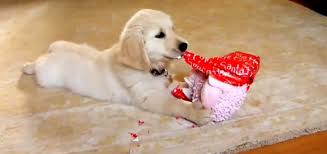of the day dogs opening presents compilation