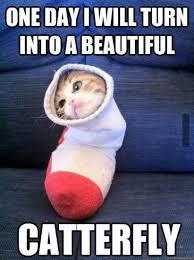 Funny Birthday Memes Tumblr - wp000b0036 happybirthdaybuzz com
