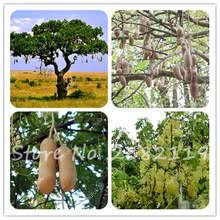 Yellow Flowering Trees - compare prices on yellow flower trees online shopping buy low