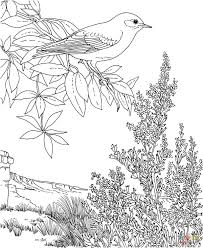 state birds coloring pages free coloring pages
