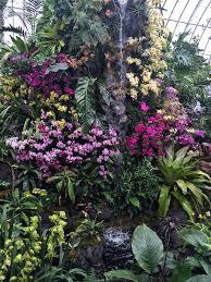 Botanical Garden Orchid Show Orchidelirium 2016 Orchid Show At The New York Botanical Garden