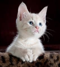 Cat Memes Generator - cat meme generator cats