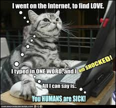Meme Porn - lolcats porn lol at funny cat memes funny cat pictures with