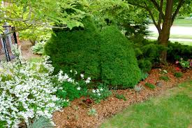 garden how to enhance the appearance of your home with beautiful