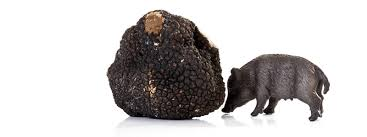 where can you buy truffles you can now buy a 120 truffle infused vinepair