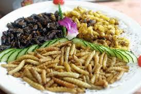 insectes dans la cuisine larves pour cuisine aux insectes comestibles hotlix le de moon