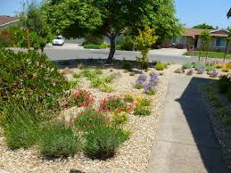 low maintenance front yard rolitz with landscaping ideas regard to