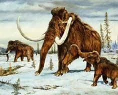 mammoth cloning closer reality