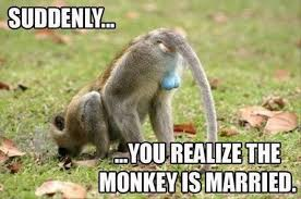 Funny Monkey Memes - funny monkey puns