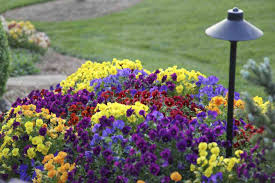 choosing annual flower garden design s tips for growing beginners