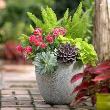 Potted Garden Ideas Garden Ideas In Autumn Bring Your Potted Plants Indoors