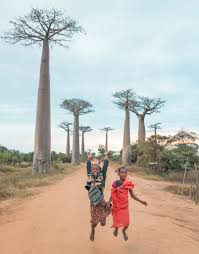 a quick guide to the avenue of the baobabs restless