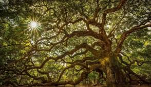 12 of our world s most beautiful trees