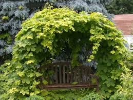 Trellis For Climbers 20 Green Fence Designs Plants To Beautify Garden Design And Yard