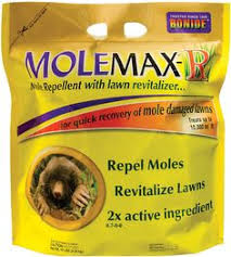 How To Get Rid Of Moles In The Backyard by Getting Rid Of Moles Mole Yards And Gardens