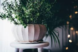 Beautiful House Plants by Gorgeous And Almost U0027impossible To Kill U0027 House Plants Elle
