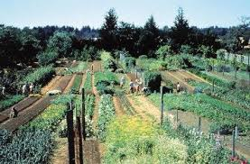 gallery of large vegetable garden design catchy homes interior
