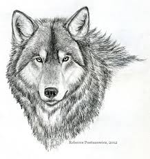 drawn wolf basic pencil and in color drawn wolf basic