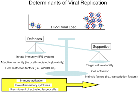 host genes associated with hiv 1 replication in lymphatic tissue