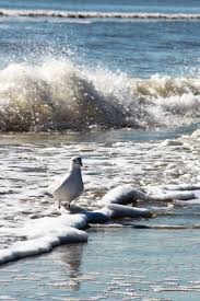 Palm Beach Tan Northport 12 Best Hamptons Beaches Images On Pinterest East Hampton