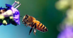 pollinators of native plants landscaping for pollinators jersey friendly yards