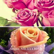 roses colors popular white green roses buy cheap white green roses lots from