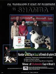 diamond s australian shepherds international album 1