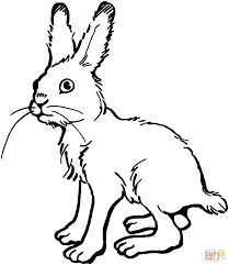 arctic hare clipart jackrabbit pencil and in color arctic hare