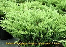 comprar viagra generico en andorra juniper