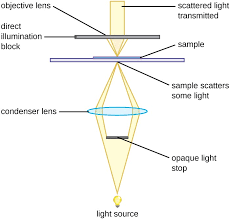 name one advantage of light microscopes over electron microscopes instruments of microscopy microbiology