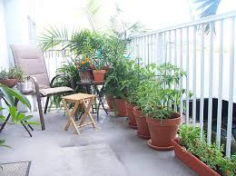 balcony gardens prove no space is too small for plants balcony
