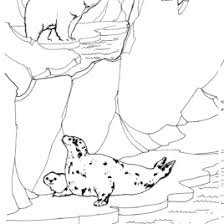 arctic animals coloring pages free printable pictures coloring