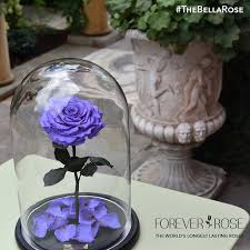forever roses beauty and the beast roses actually exist stay alive for more than