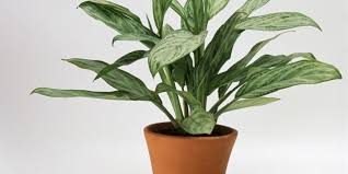 10 detoxing houseplants that will purify the air in your home