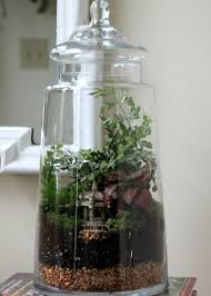 good closed terrarium plants custom set furniture