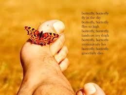 butterfly butterfly fly in the