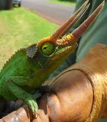 Hawaii wild animals images Wildlife programs injurious wildlife png