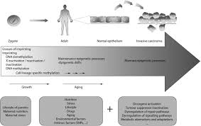 aberrant methylation patterns in cancer a clinical view