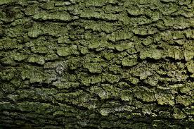 tree texture by gianni81 on deviantart
