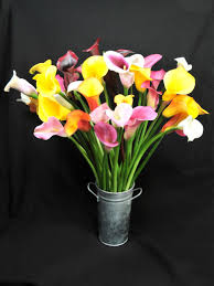 cala lillies calla varieties hgtv